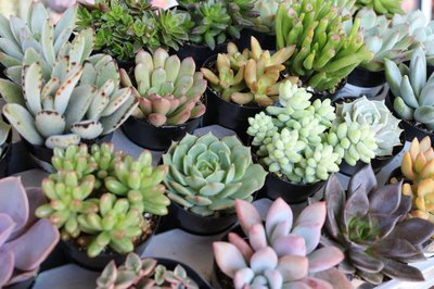 The Succulent Source Photo 2
