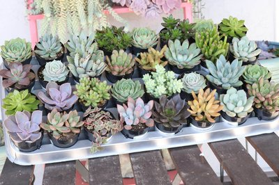 The Succulent Source Photo 1