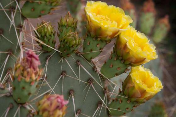 Bloomin Bin Subscription Box for Gardeners Cratejoy