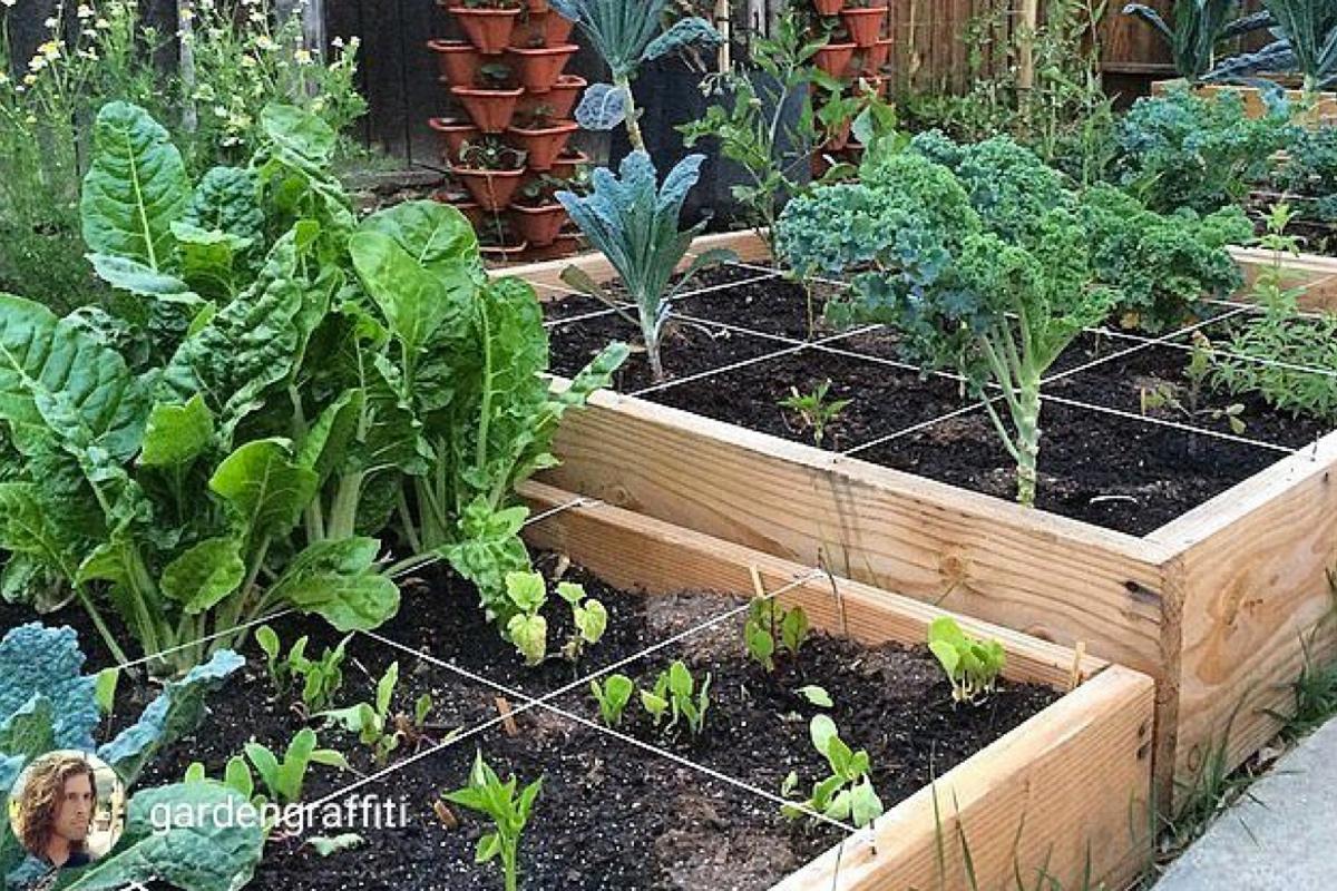 100 Urban Organic Gardener Micro Greens Recipes Pinterest