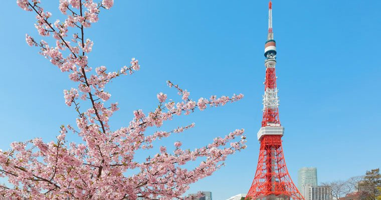 Tokyo Tower is beautiful during Sakura Season