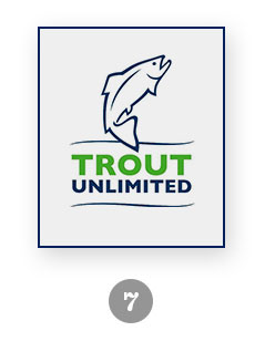 trout-img7