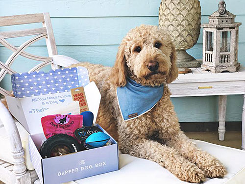 dapper dog box best pet subscription box