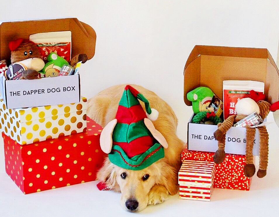 Birthday Gifts & Christmas Present Boxes For Dogs | Dapper Dog Box