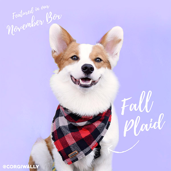 November plaid bandana with a dog subscription box