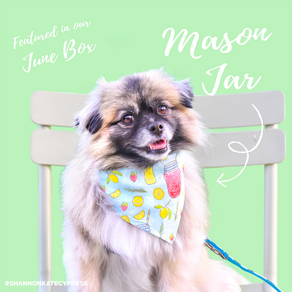 June mason jars bandana inside dog boxes
