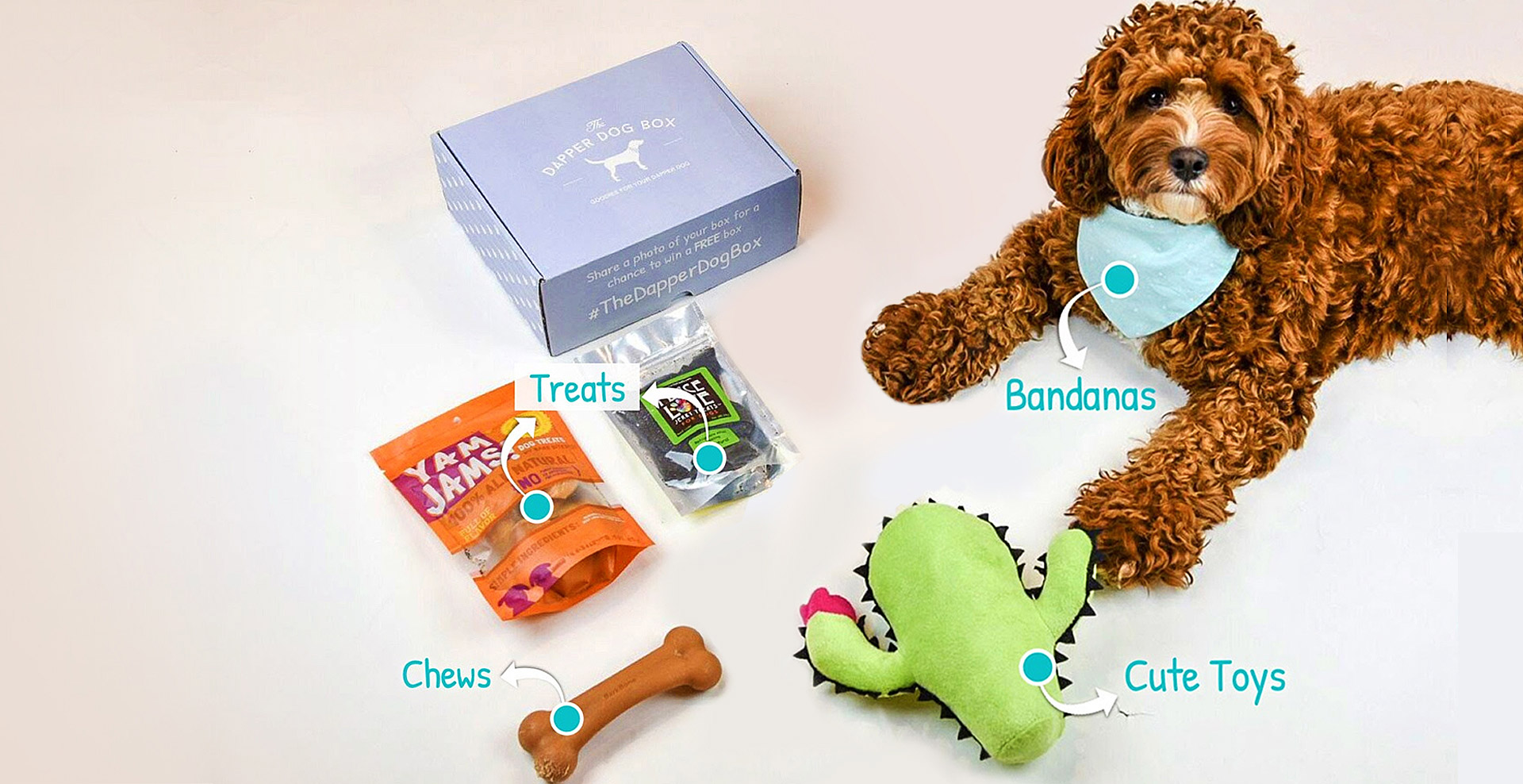 fluffy dog wearing bandana with dog subscription box of treats, chews, and cute toys